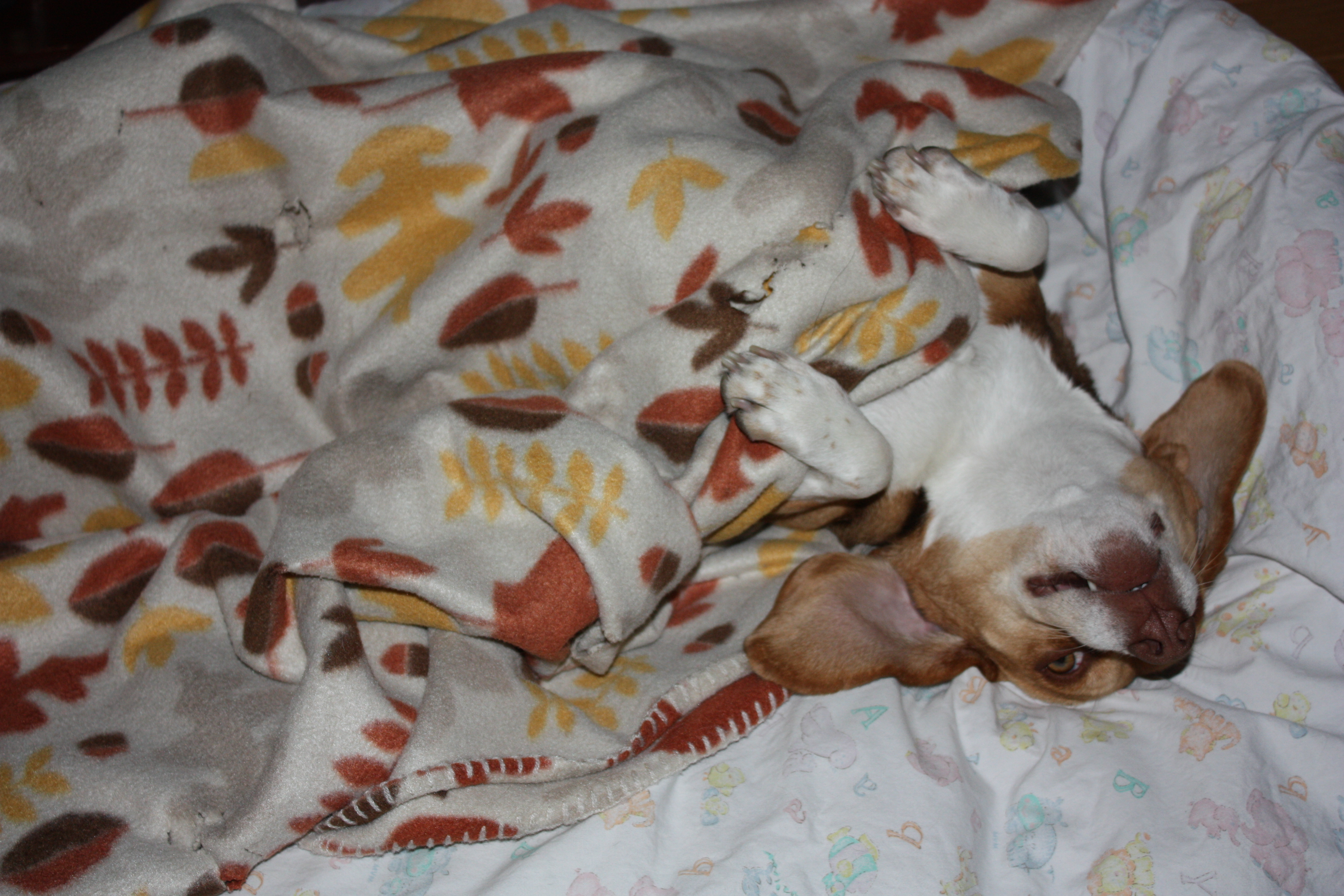Beaglemation - photo#28