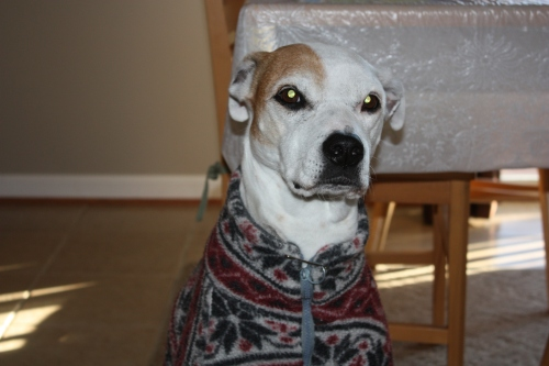 "Alex, ""I can't believe you took me out for a walk in this horrible cold weather."""