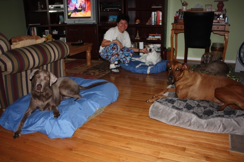 Josie, Marcela, Alex, Sarris, and Dozer