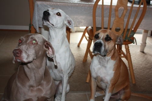 Sarris, Alex, and Dexter (L-R)