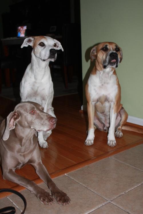 Sarris, Alex, and Dexter (L - R)
