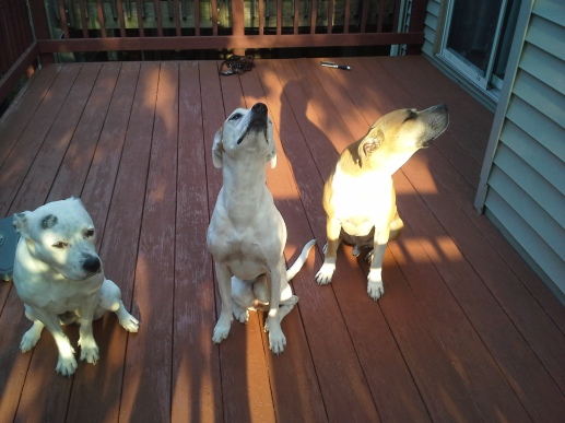 """Bella, Alex, and Dexter (L - R) Alex and Dexter to Bella, """"Wow!  Something smells delicious."""""""