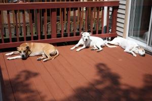 Dexter, Bella, and Alex (L to R)