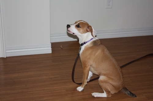 Balanced Dog Training Boston